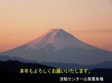 fujisan-fish.jpg